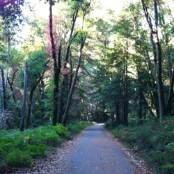 Henry Cowell Redwoods State Park logo