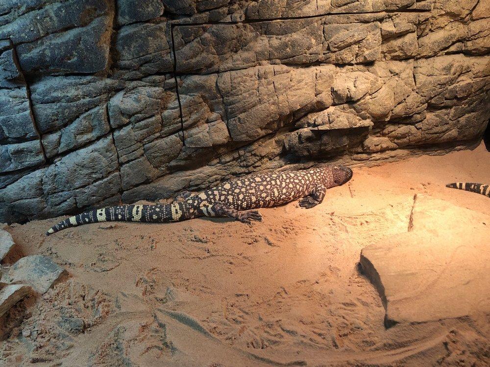 Reptile Lagoon: 3346 Us 301, Hamer, SC