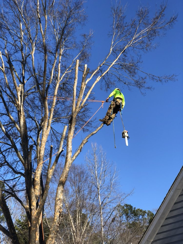 Photos for Out On A Limb Tree Service - Yelp