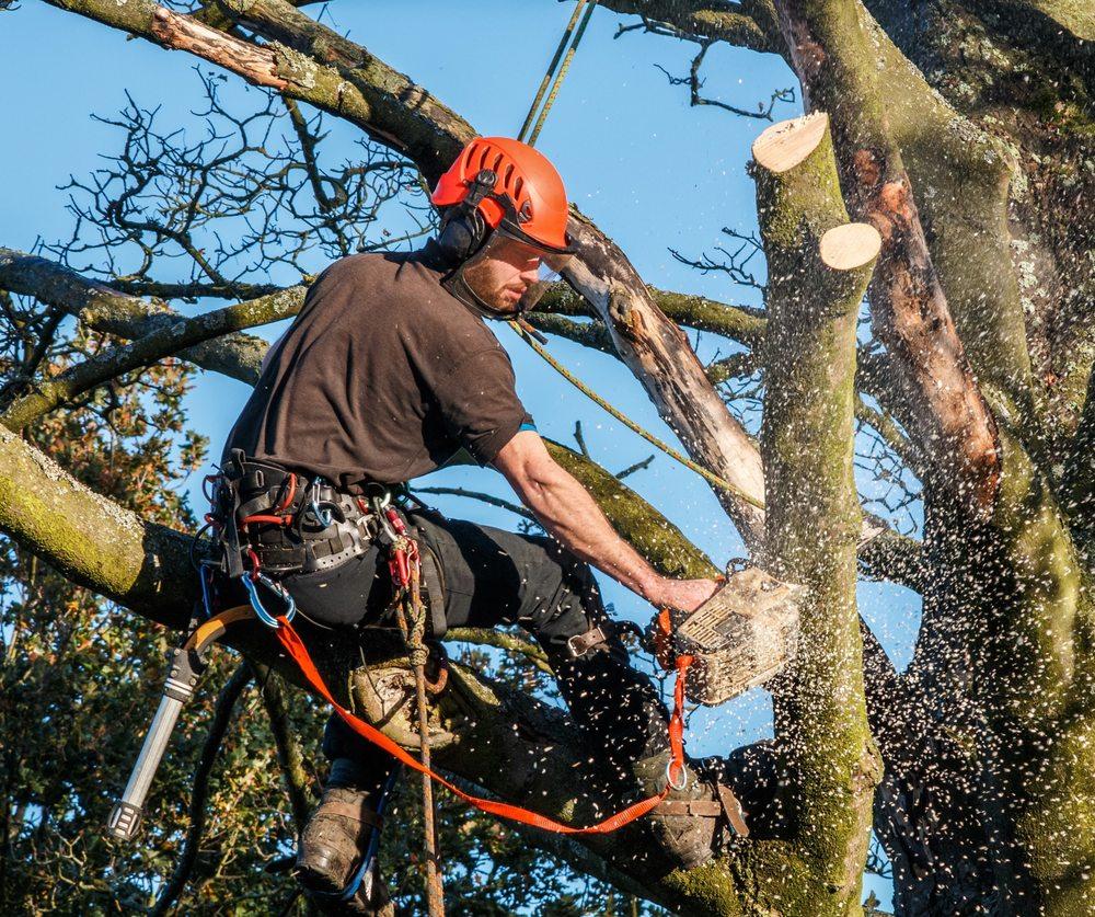 Professional Tree Service: 3309 Pole Line Rd, Pocatello, ID