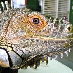 scales n tails las vegas 44 photos 50 reviews reptile shops