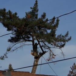 Photo Of Atlas Tree Service Concord Ca United States 1 The