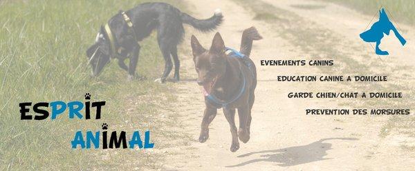 Esprit Animal Request A Quote Pet Training Dignac