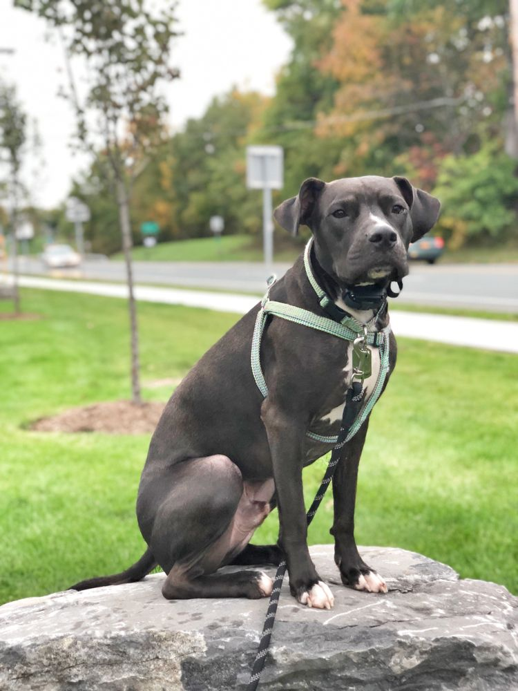 New Hampshire Dog Trainers: Off Leash K9 Training: 889 Elm St, Manchester, NH
