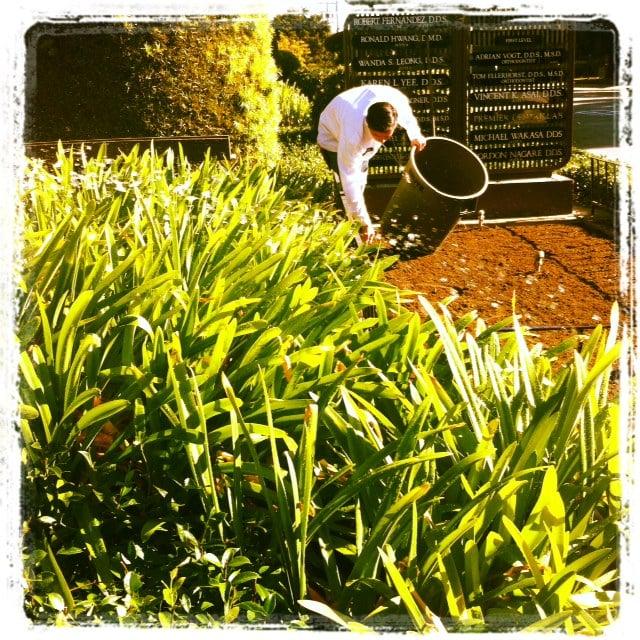Celys Garden Maintenance   Gardeners   Palo Alto, CA   Phone Number   Yelp