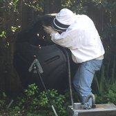 Photo Of Houston Bee Removal Spring Tx United States