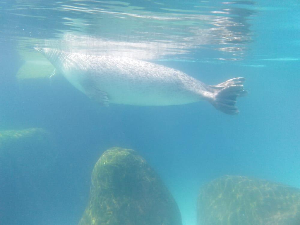 4d58d8f5673 Yelp s Field Trip   Virginia Aquarium   Marine Science Center - 133 ...
