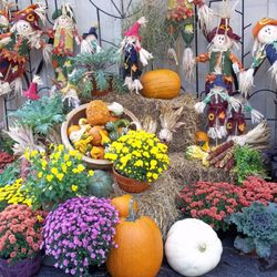 Photo Of Homewood Nursery Garden Center Raleigh Nc United States Fall