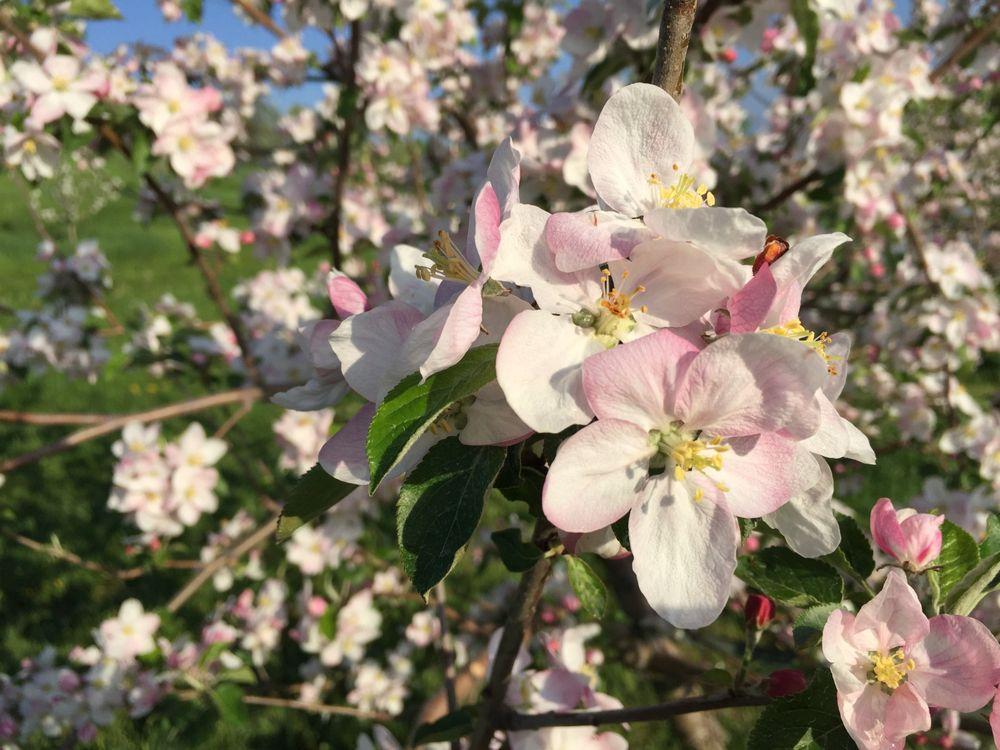 Blueberry Ridge Orchard: E2795 Hageness Rd, Eleva, WI