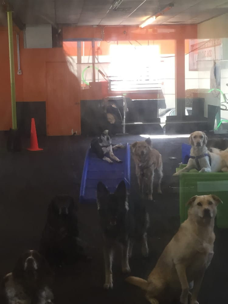 Fuzzy Buddy's Dog Daycare