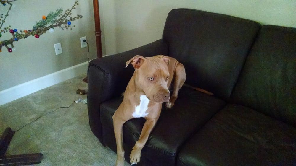 Bully Dog Rescue Fresno Ca