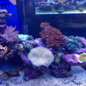Photo Of Living Reef Aquariums   Oakland Park, FL, United States. So Pretty