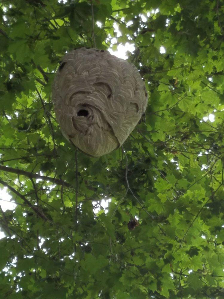 Bug Us Pest Control: 21 Adams St, Belvidere, NJ