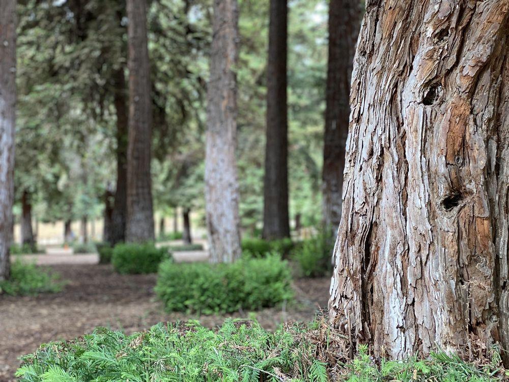 Carbon Canyon Regional Park