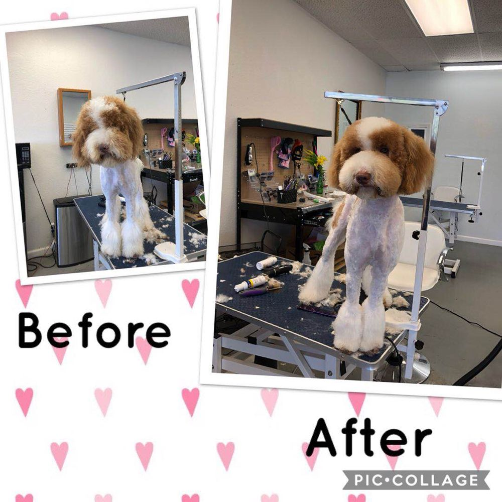 Pet Paw Grooming: 14250 E Nelson Ave, City of Industry, CA