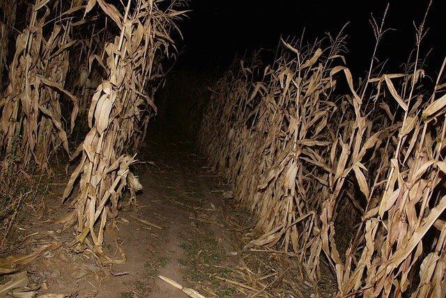 Magic Valley Corn Maze: 4334 East 3700 N, Hansen, ID