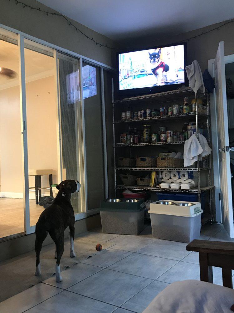 Four Paws Dog Services: Apollo Beach, FL