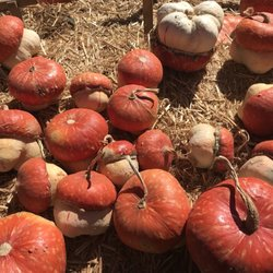 Best pumpkin patches and farms in san diego.