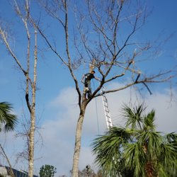 Photo Of Branch Managers Tree Service Odessa Fl United States Hurricane Michael