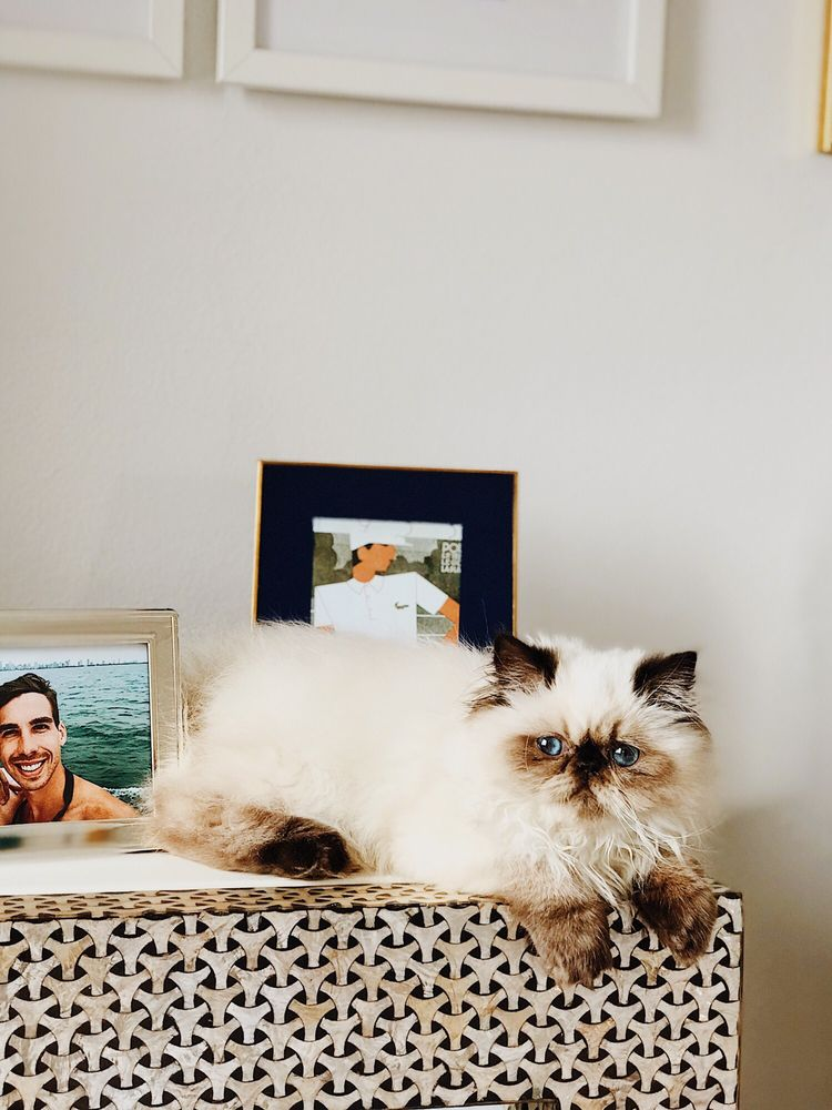 Elite Kitten: Lemont, IL