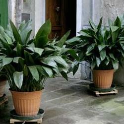 Photo Of Janeu0027s Interior Plantscapes   West Orange, NJ, United States ...