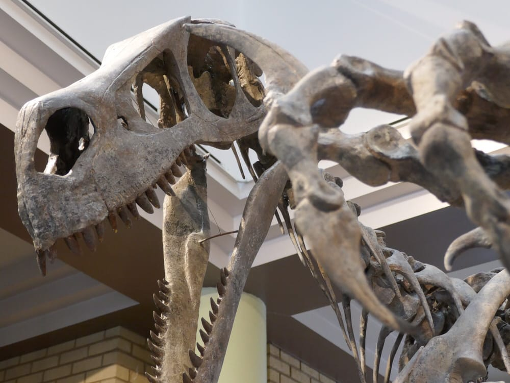 USU Eastern Prehistoric Museum: 155 E Main St, Price, UT