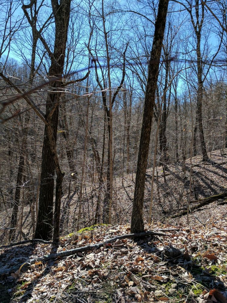 Jefferson Memorial Forest: 11311 Mitchell Hill Rd, Fairdale, KY