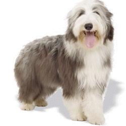 Sarah S Mobile Dog Grooming Services Beauty Spas Landseer