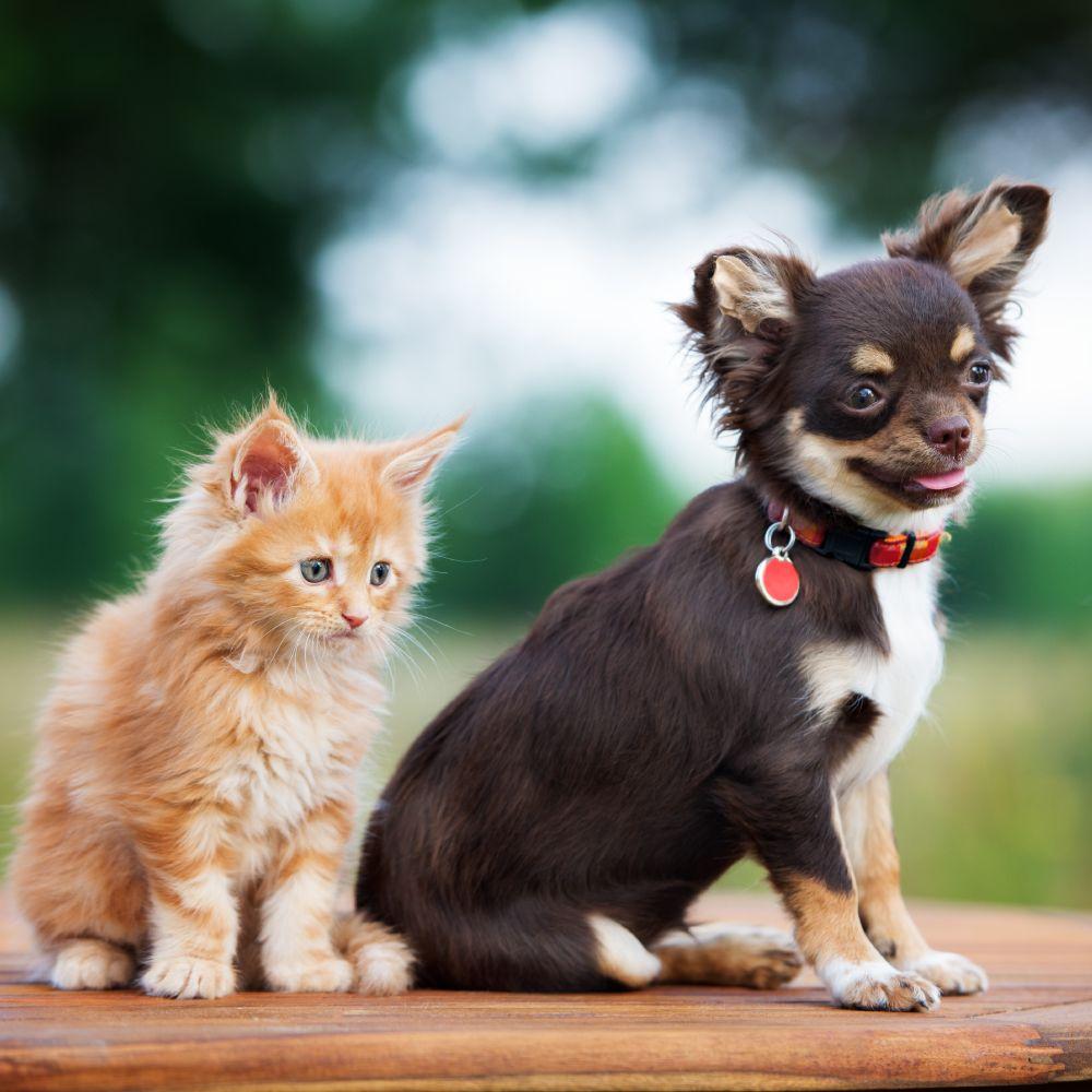 VIP Petcare: St. Louis, MO