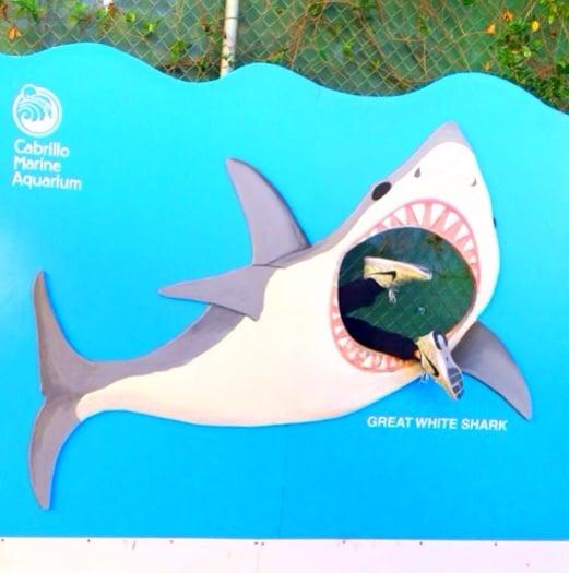 shark attack! - Yelp