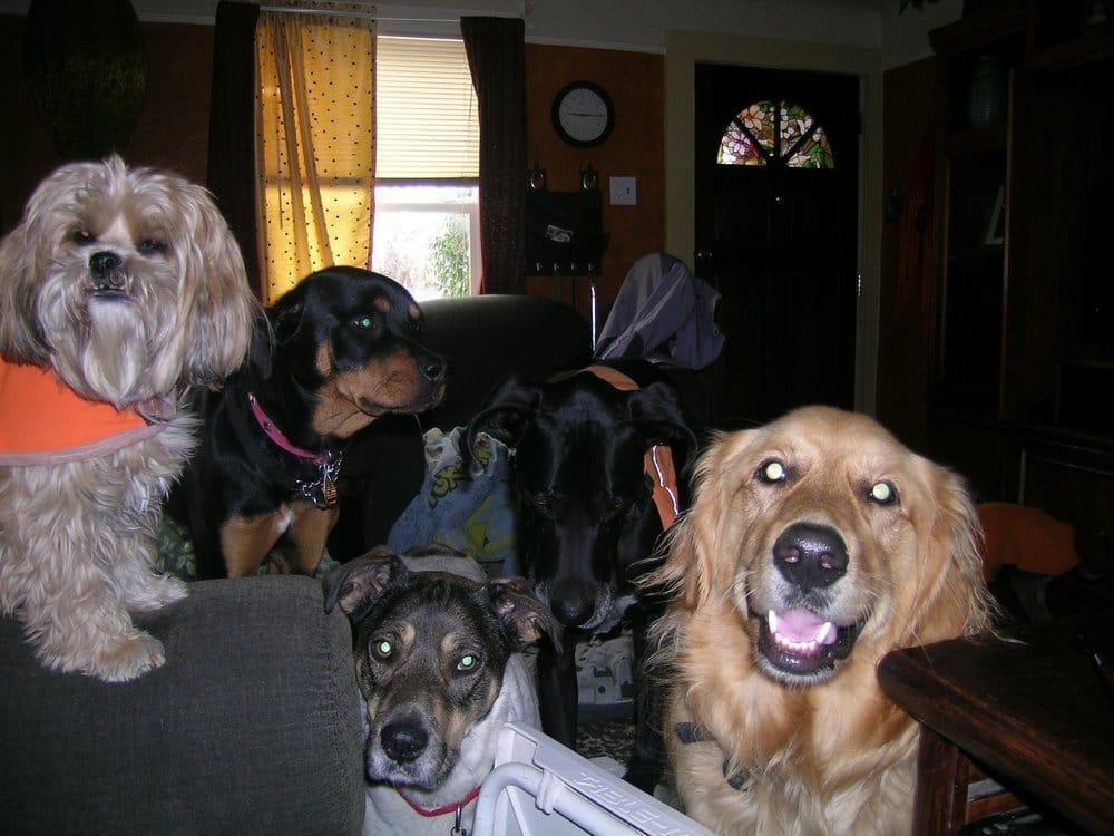 Aunt Kim S Dog House Daycare Amp Boarding 30 Photos Pet