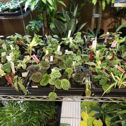 Photo Of Portland Nursery Or United States Cute Little Plants