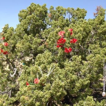photo of christmas tree pass laughlin nv united states christmas tree