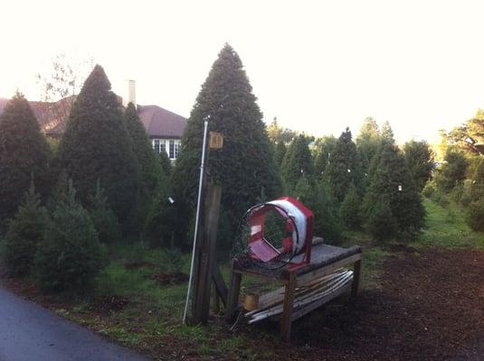 28 Wallinfarm Christmas Trees Sebastpol U Cut Tree