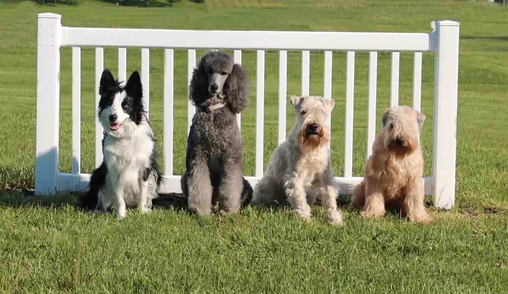 Manners N' More Dog Training School: Benner Pike Village, Bellefonte, PA