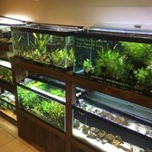 Aquascaping Supply 2019 All You Need To Know Before You Go With
