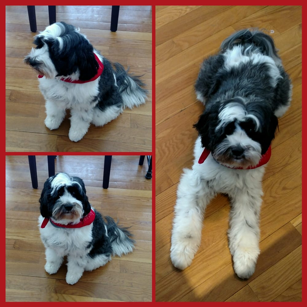 Greenfield Hill Dog Grooming