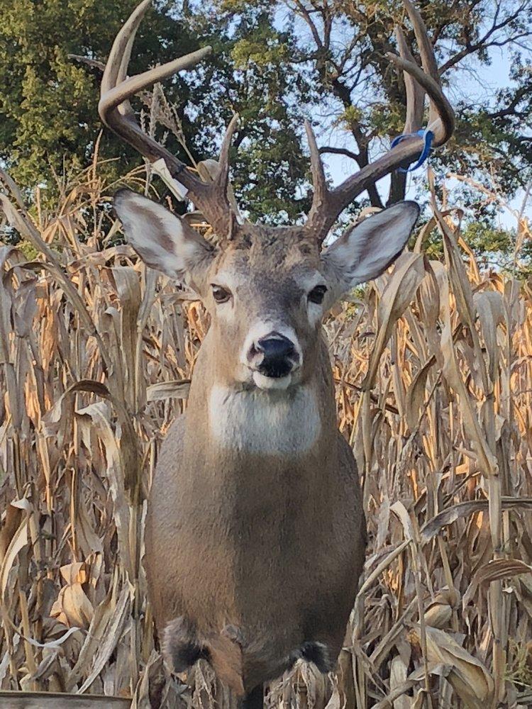 Wild Outdoor Taxidermy: 7957 Brakhane Rd, Edwardsville, IL