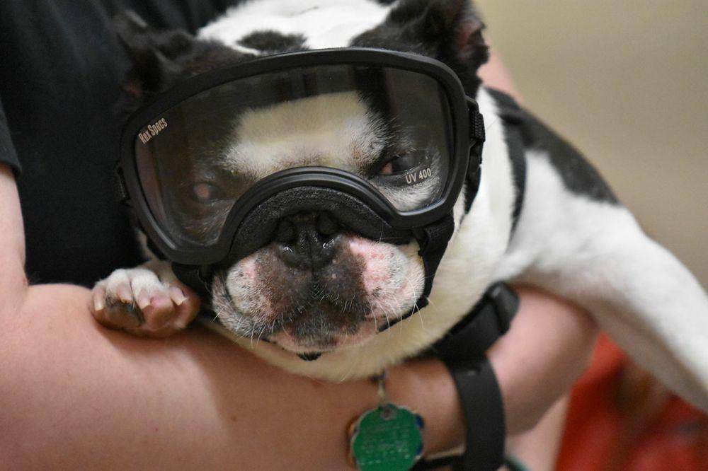 Armour Veterinary Ophthalmology: 4105 Brandywine St NW, Washington, DC, DC