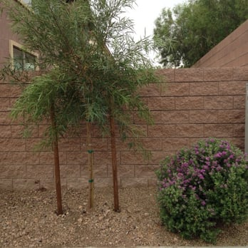 Photo Of Sunshine Landscaping   Las Vegas, NV, United States. Finally A Tree