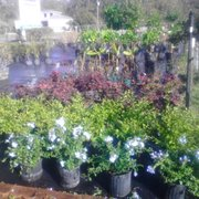 ... Photo Of Gulf Coast Landscaping U0026 Supply LLC/Wakulla Sod And Nursery    Crawfordville, ...