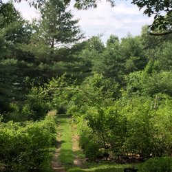 Photo Of King S Tree Farm Nursery West Boxford Ma United States