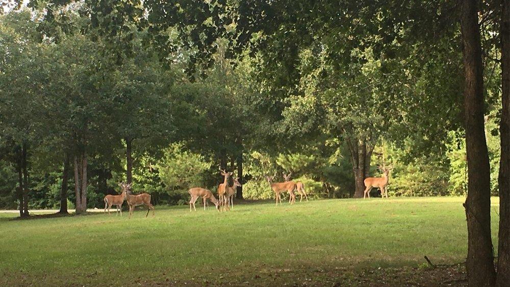 Deer Lake Lodge & Spa - Montgomery