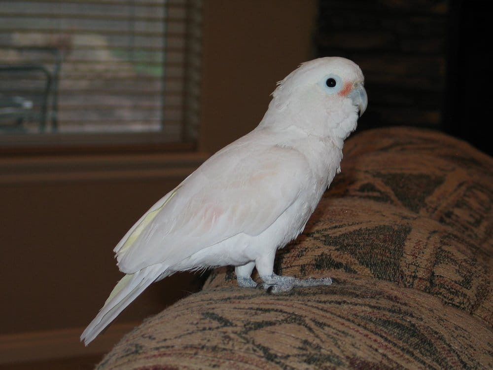 Cedar City Pet Sitting and Boarding: 4891 W 1000th S, Cedar City, UT