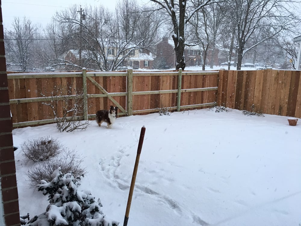 6' Scalloped Cedar Privacy Fence By Pioneer Fence. 5-foot