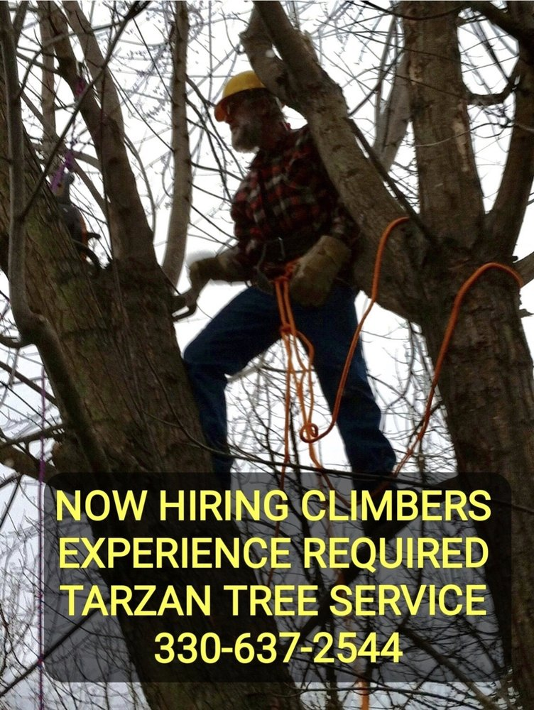 Tarzan Tree Service: 2972 Warner Rd, Fowler, OH