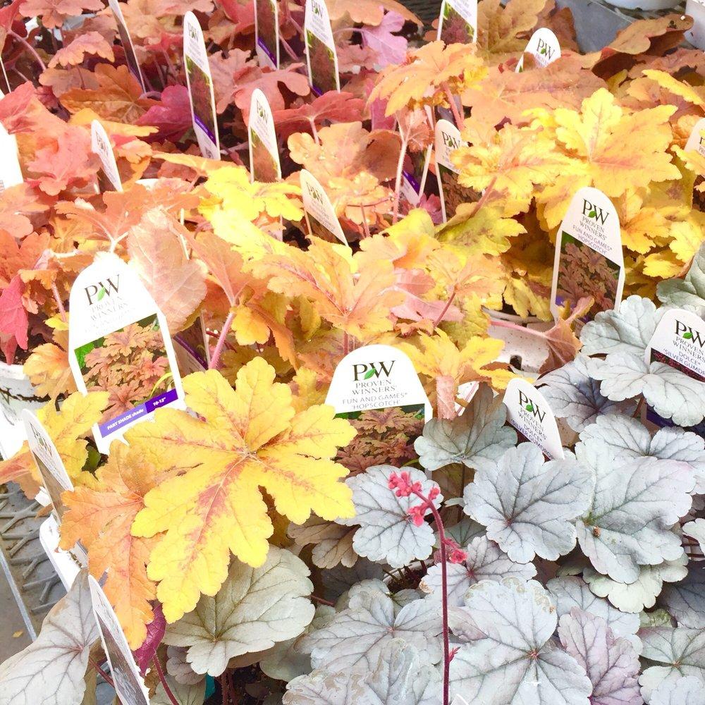 Mahoney's Garden Centers: 242 Cambridge St, Winchester, MA