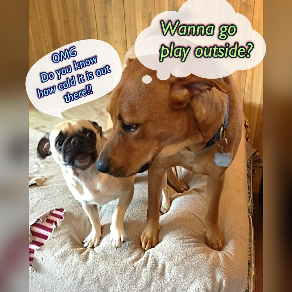 Dog Crazy Daycare & Spa: 4372 Batavia Elba Tl Rd, Batavia, NY