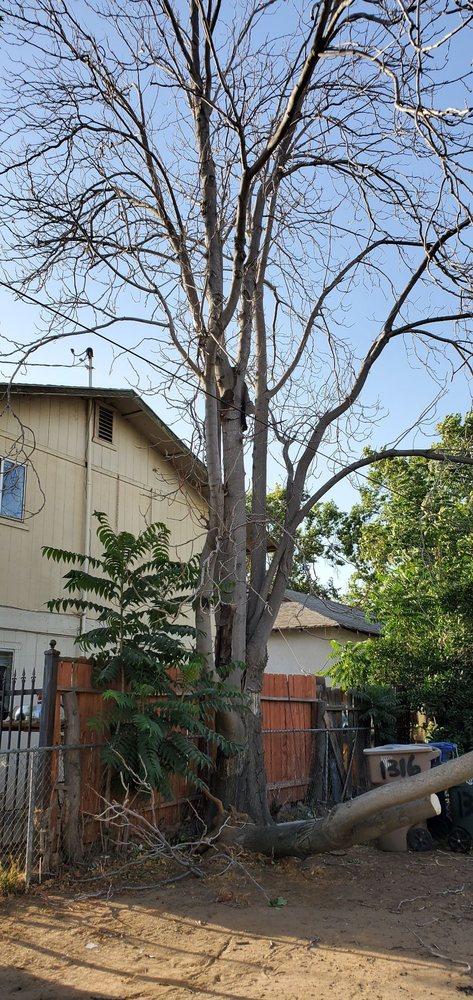 Salas Tree Service: 1939 Weedpatch Hwy, Bakersfield, CA