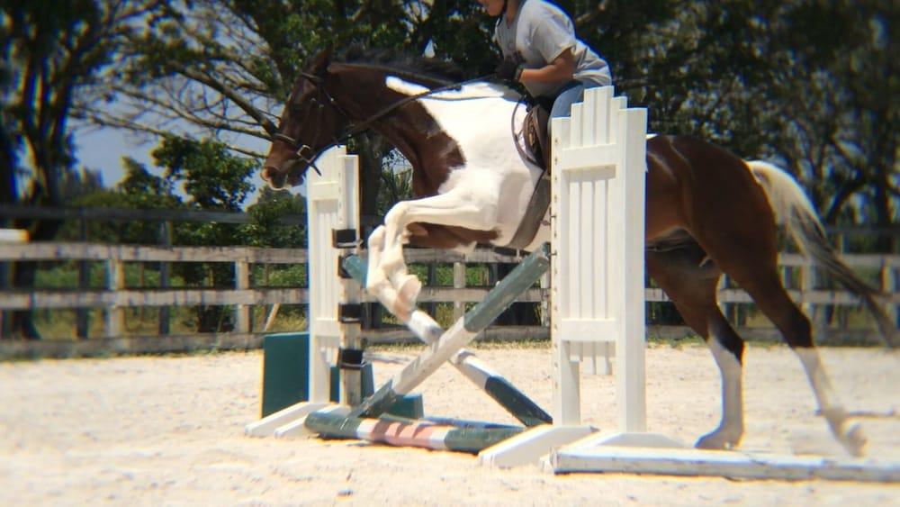 Miami Equestrian Center 11 Photos Horseback Riding